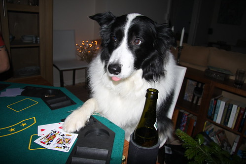 My dog playing poker....