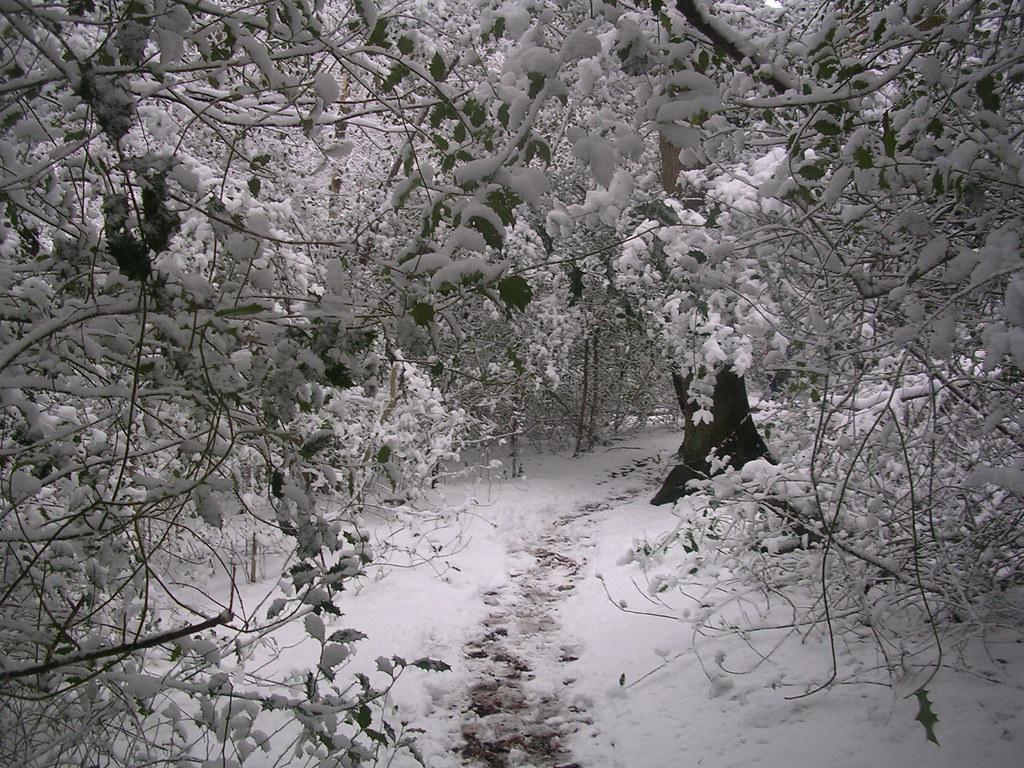 Snowy scene Haslemere Circular (silent walk)
