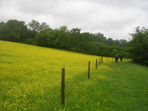 Us walking near the buttercups