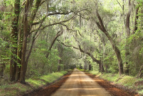 southcarolina spanishmoss dirtroads edistoisland oldsouth edistoislandsouthcarolina southcarolinacoastine southernbackwoods