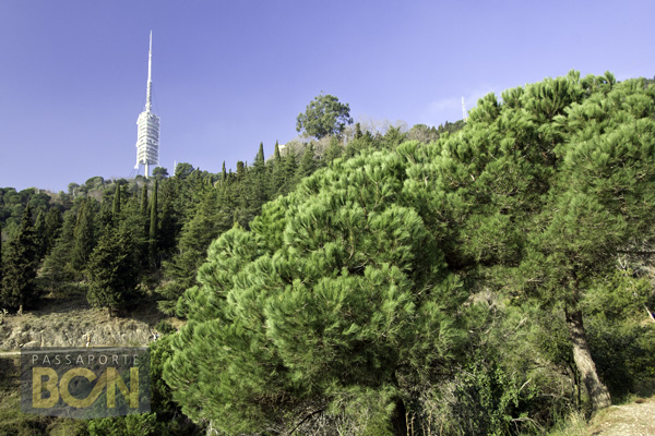 Parc de Collserola