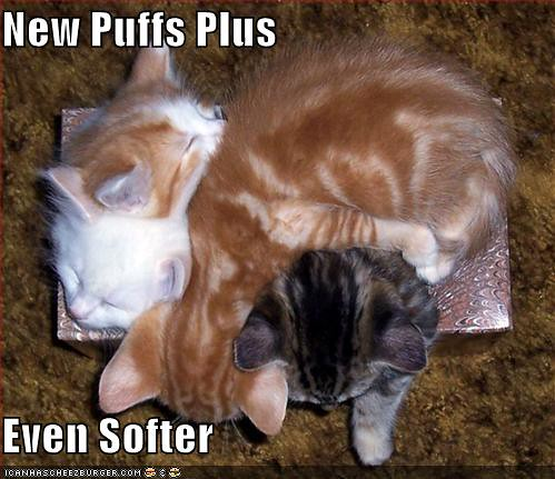 funny-pictures-soft-kittens-tissue-box