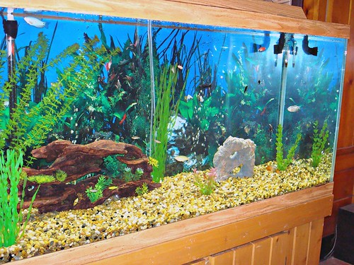 Freshwater fish tank cleaning fish how to clean a for How to clean out a fish tank
