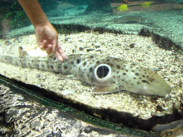 epaulette shark tank - photo #1
