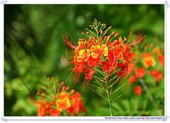 20041020_Guana@BVI_Flower_001_A