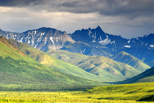 Denali National Park #3