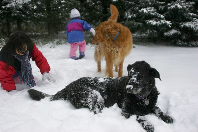 Girls Playing with the Dogs Outside in the Snow