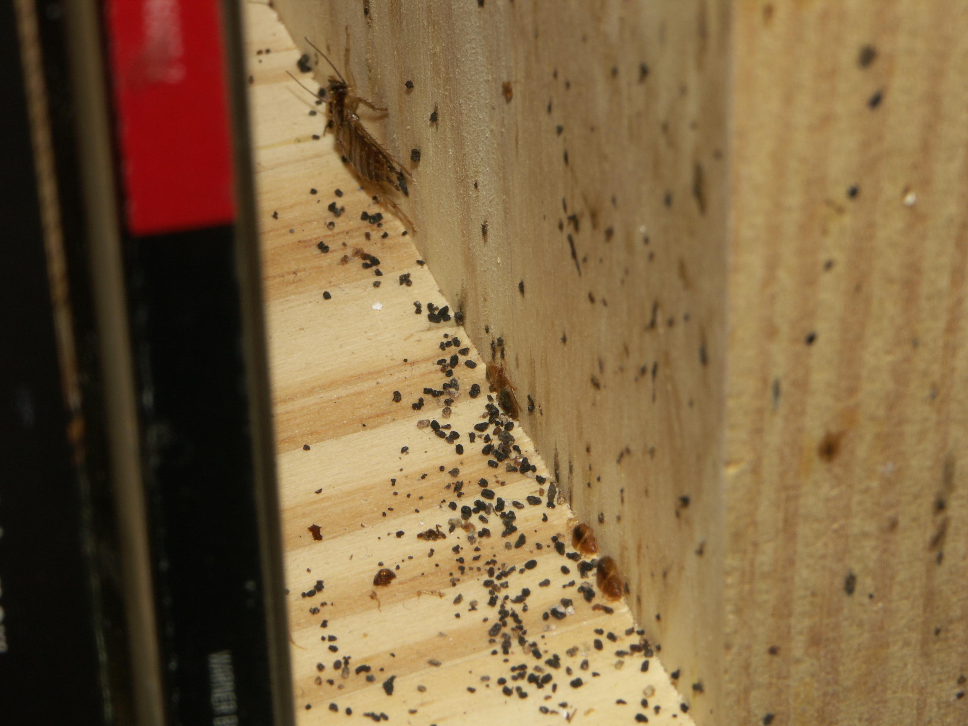 Ловушки для тараканов своими 17