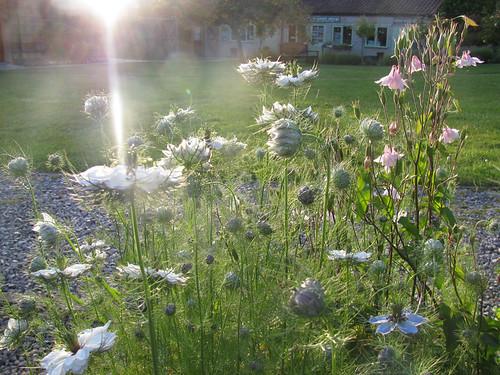Evening walk in the gardens by jackiesjottings
