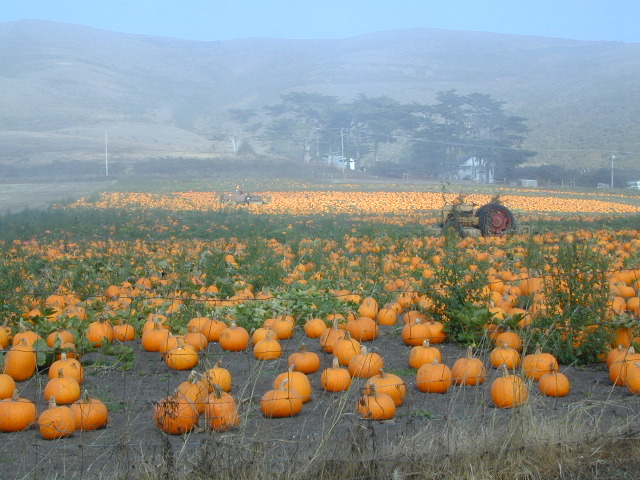 Pumpkin Farm @ Coast