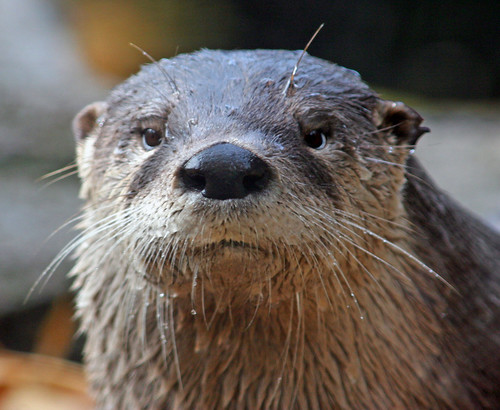 You otter have a great weekend!