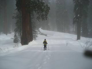 Sequoia NP 054
