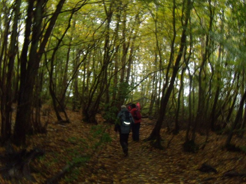 Wet wood Robertsbridge to Battle