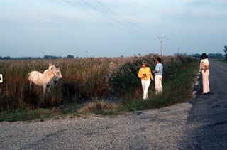 People in white trousers stopping by the side of the road to meet wild horses