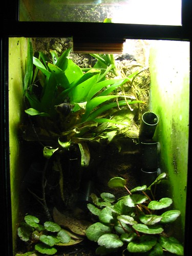 Aquariums - Page 3 - The Hull Truth - Boating and Fishing ... 10 Gallon Dart Frog Vivarium