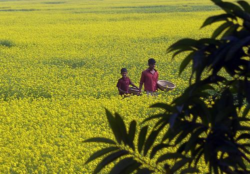Happy Bangladesh 03