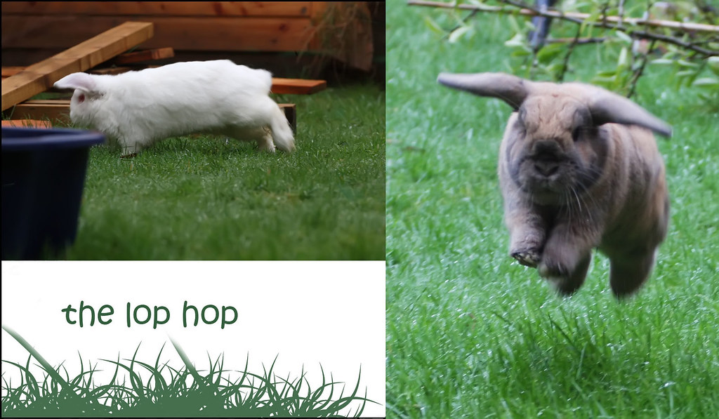 the lop hop