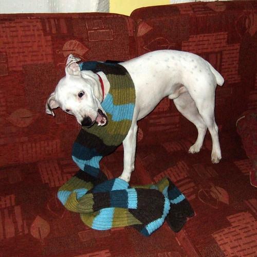 Dog Chewed Up Rug: Spy Camera Scenario: Remotely Monitoring A Dog While At