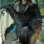 Los Angeles Zoo 065