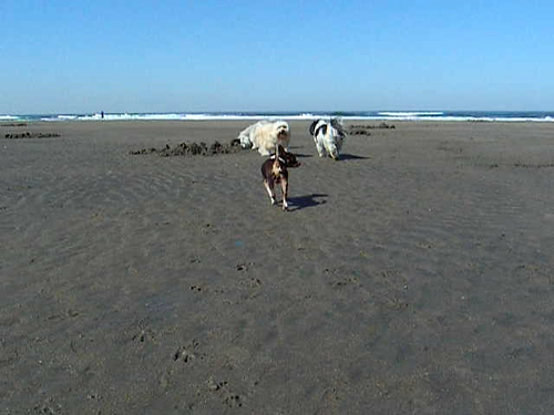 Baba & Desi at Ocean Beach