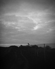The Bird [Pen EE]
