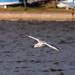 Edg_Res_Birds-5.jpg