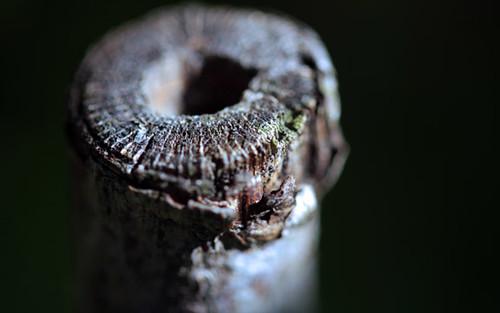 Branch tube