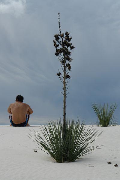 Es increíble ver la diversa vegetación y animales que viven en éstas dunas white sands, un desierto único que cambió el mundo - 2527430381 04f4fc562c o - White Sands, un desierto único que cambió el mundo