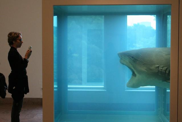 capturing the art shark