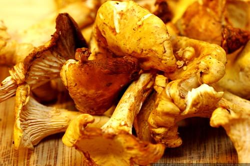 Cantharellus (Chanterelle) mushrooms await slicing    MG 5544