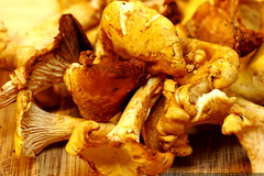 Cantharellus (Chanterelle) mushrooms await slicing  …