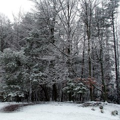 woodland, branch, winter, tree, snow, frost, forest,
