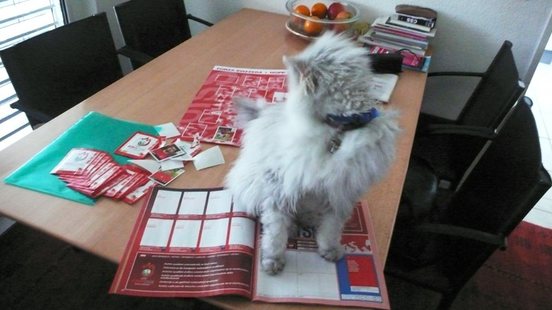 Fluffy helping to stick football photos