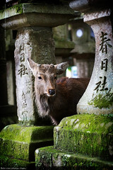 Kasuga Shrine, Nara (#30)