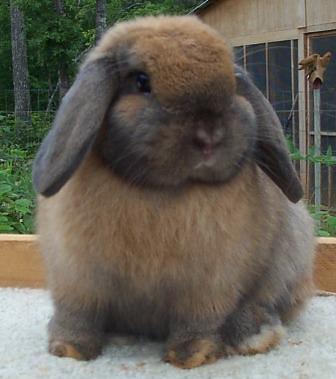 big fat bunny