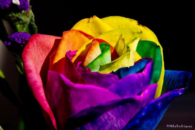 tie dye roses momday11 5 flickr photo