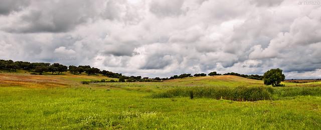 Sevillian pastureland (IV)