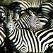 Serengeti_400