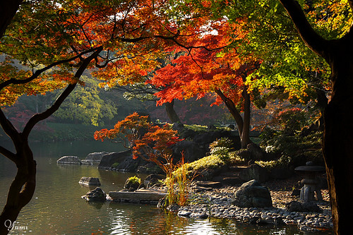 autumn Japanese garden