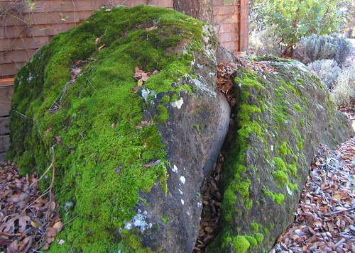 napa, calistoga ranch, moss, green IMG_1357