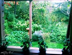 Window Delights
