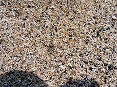 asphalt(0.0), soil(0.0), sand(0.0), rubble(0.0), granite(0.0), road surface(0.0), flooring(0.0), pebble(1.0), rock(1.0), gravel(1.0),