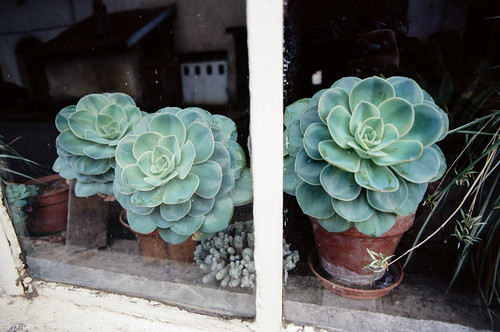 Succulents in the window