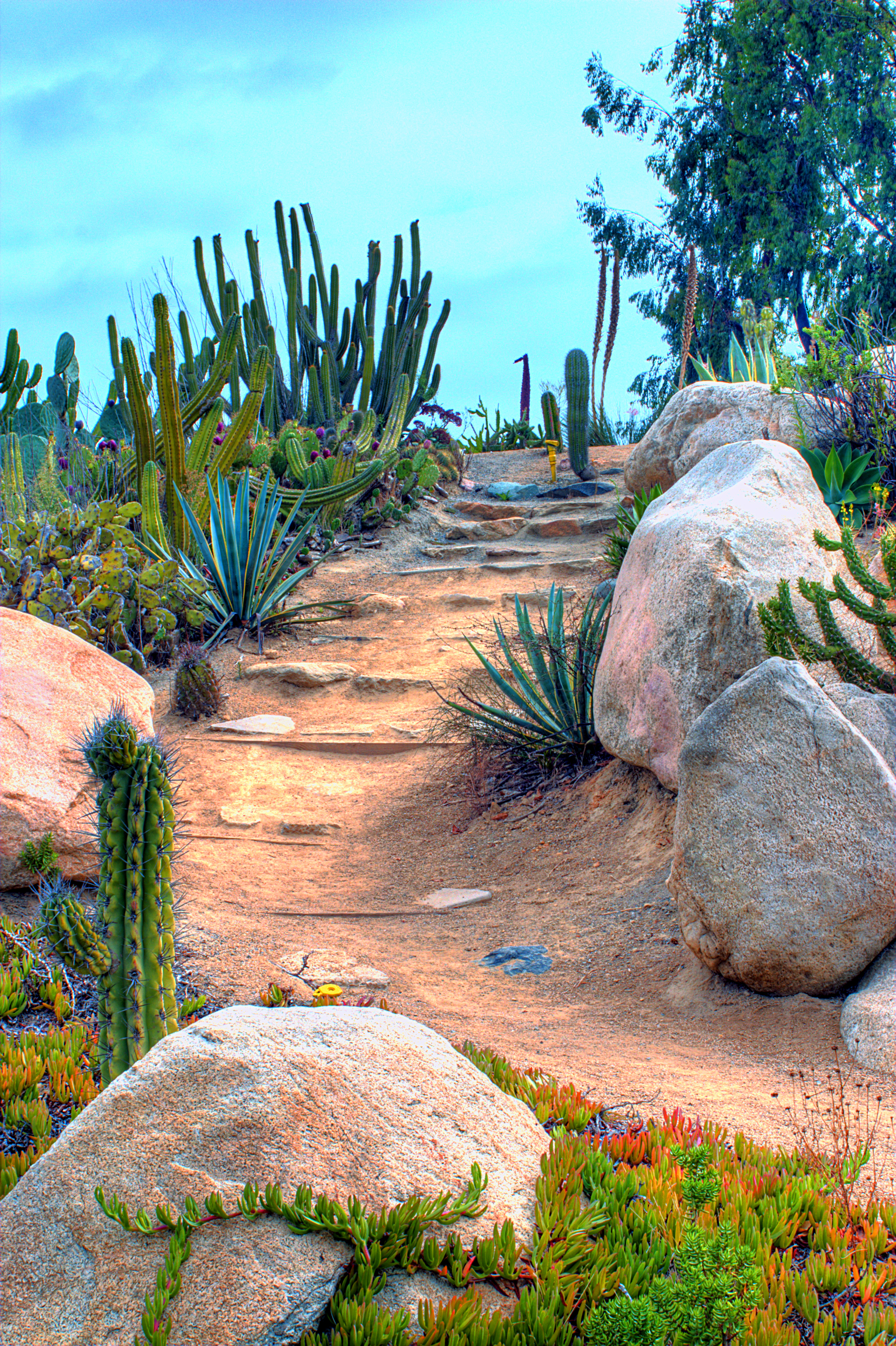 Desert Landscaping | This is an HDR composite photo. This ...