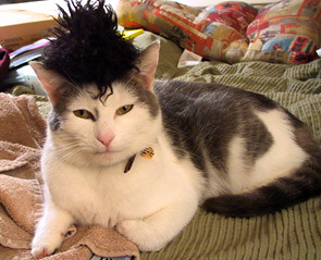 Zack in a very fine hairpiece.