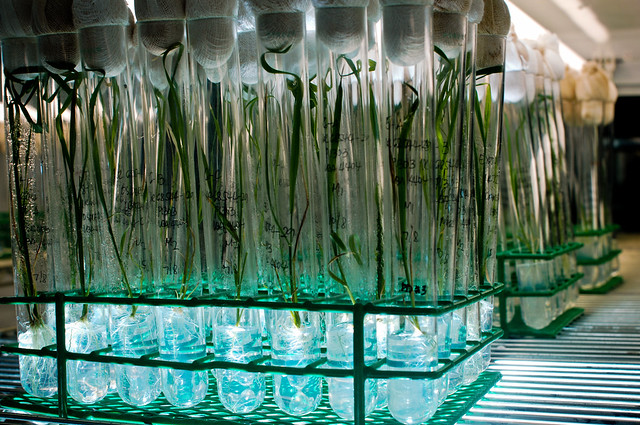 Download this Tissue Culture picture