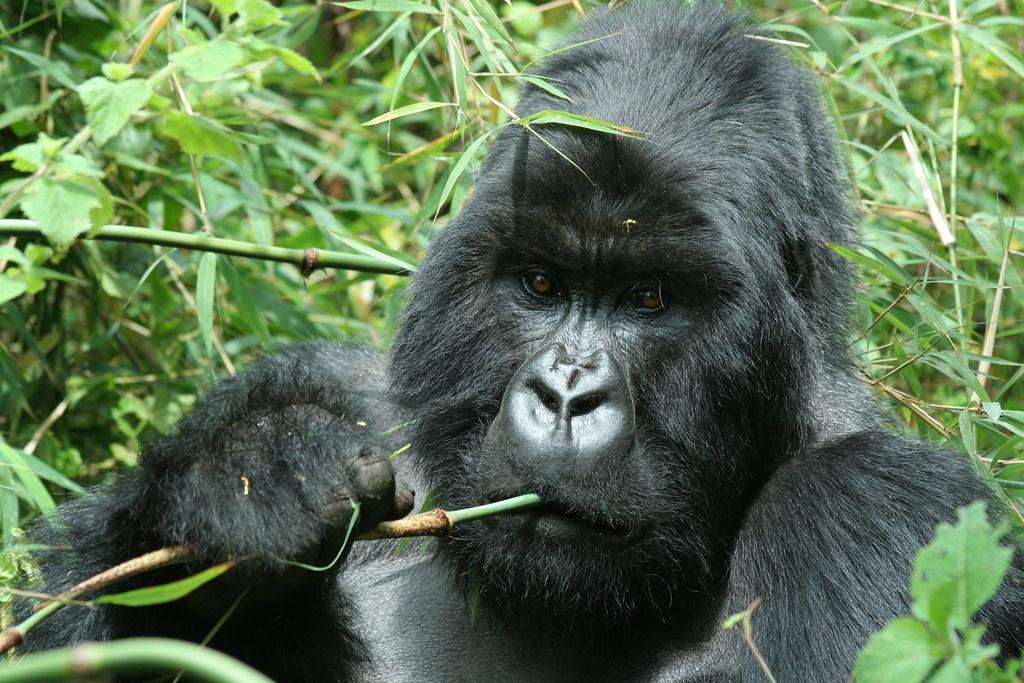 Rwanda048