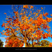 Autumn Trees III by :: Artie | Photography :: Cya in Sept!