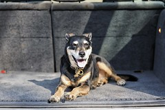 My dog Bailey