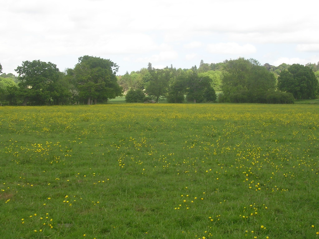 Buttercups Hever to Leigh